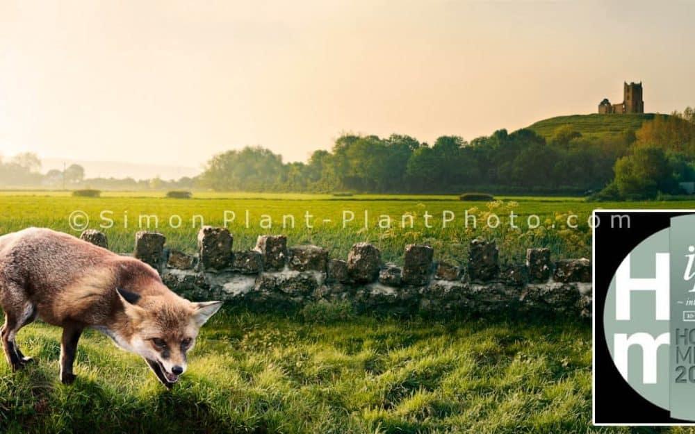 Ipa-award-untitled-fox