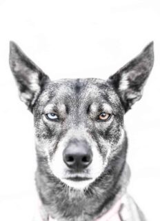 Lifestyle-portrait-barney-the-dog