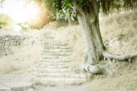 Tree-and-steps-rhodes-ancient-olympic-stadium