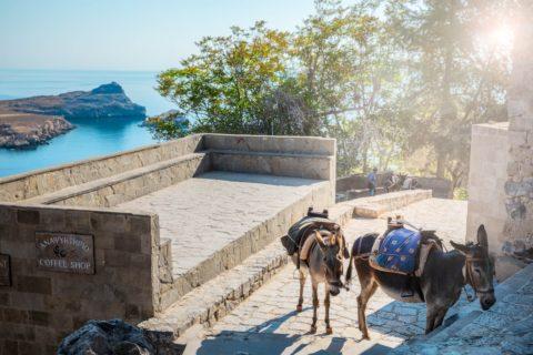 Lyndos-donkeys-next-to-acropolis-travel-photography-portfolio