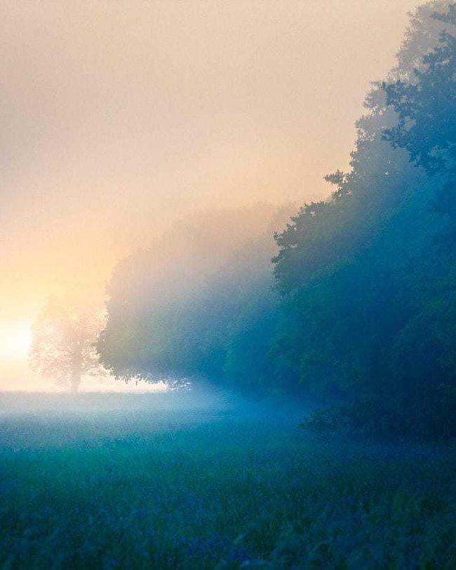 Creative-travel-photography-mist-somerset-levels