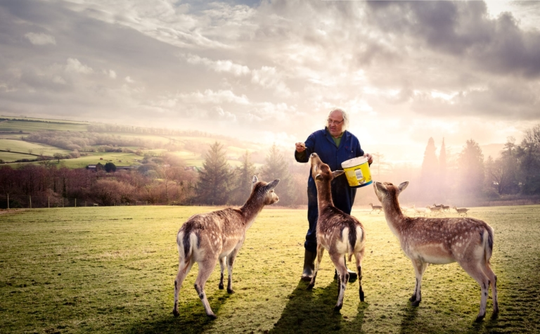 Deer-sanctuary-somerset-composite-photo-retouching