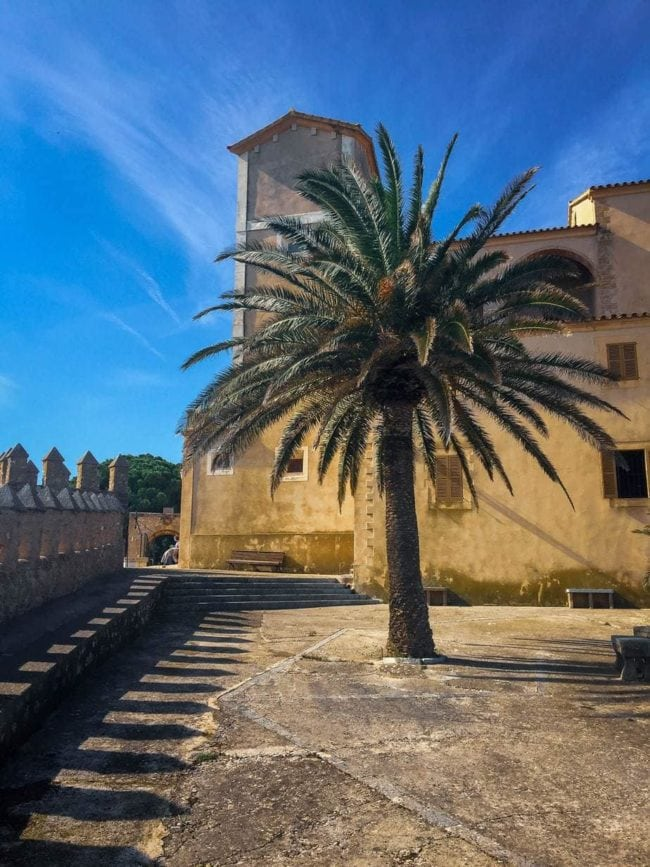 Majorcan-tree-travel-and-tourism-photography