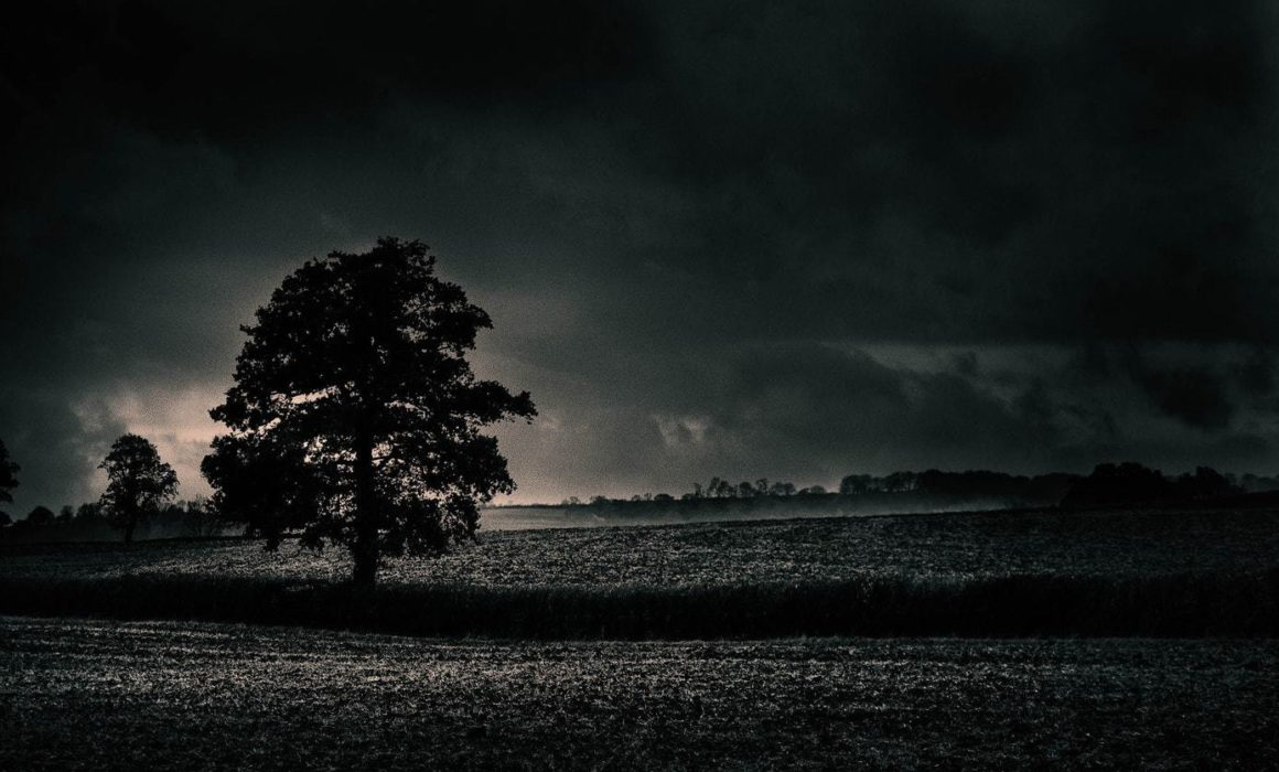 Location-in-photography-tree-in-plighted-field-somerset
