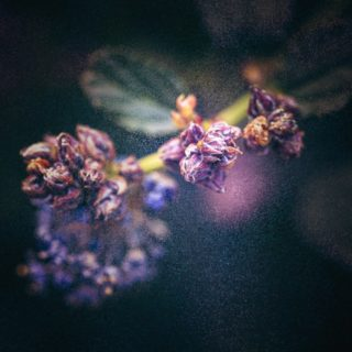 Isolate-01-macro-images-of-flowers-somerset