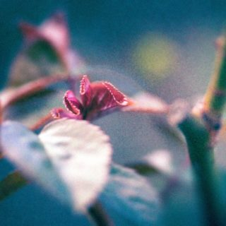 Isolate-02-macro-images-of-flowers-somerset