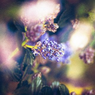 Isolate-03-macro-images-of-flowers-somerset
