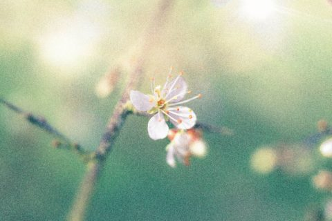 Isolate06-macro-images-of-flowers-somerset