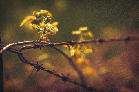 Isolate14-macro-images-of-flowers-somerset