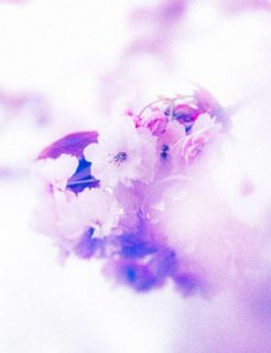 Isolate22-macro-images-of-flowers-somerset