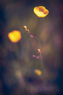 Isolate25-macro-images-of-flowers-somerset